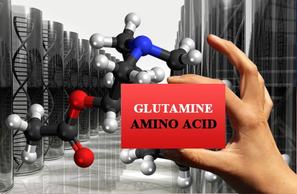 amino acids glutamine