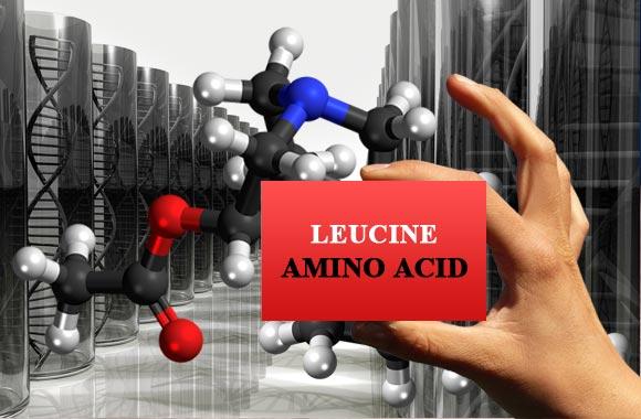 amino acids leucine