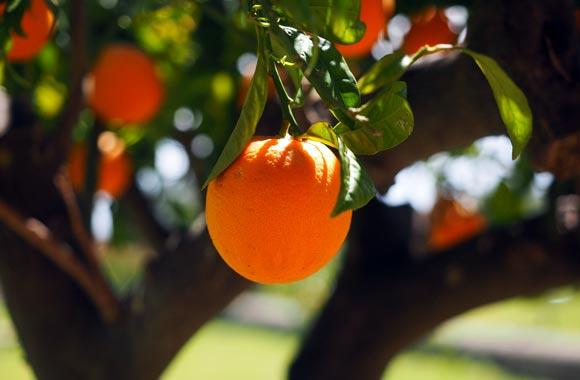 rich vitamin orange