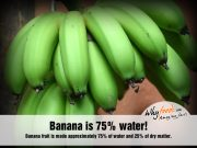 Amazing Banana Facts