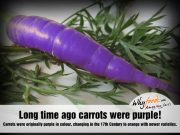 Amazing Carrot Facts