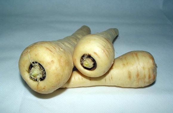parsnip root