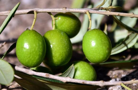 drupes fruits